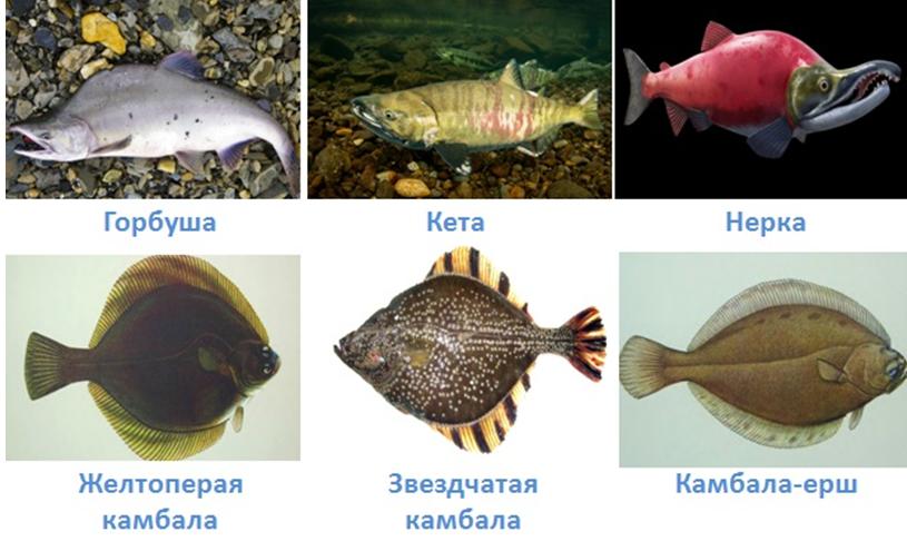 19 vodnye obekty rossii