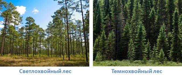 2 lesa rossii