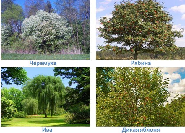 20 lesa rossii