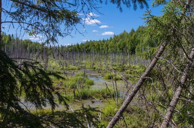 27 lesa rossii
