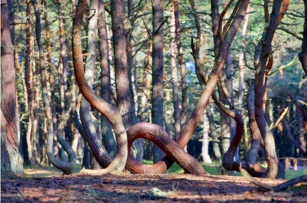 25 lesa rossii