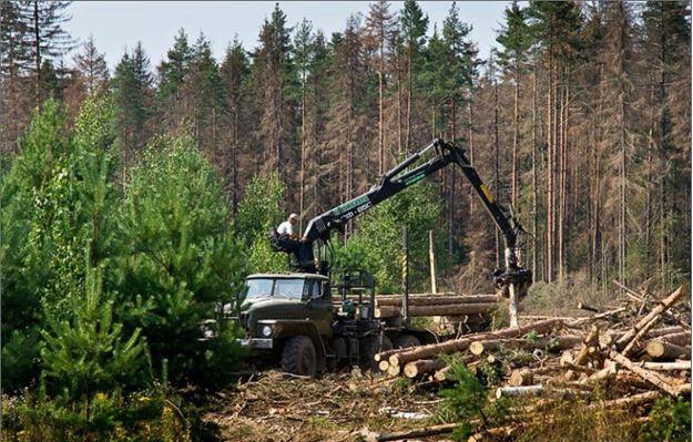 32 lesa rossii